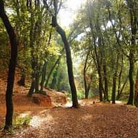 Sortida al bosc de Malivern